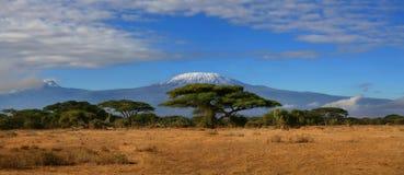 Kilimanjaro largamente Immagine Stock Libera da Diritti
