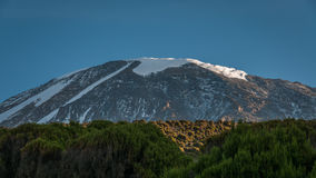 Kilimanjaro from Millenium camp Royalty Free Stock Image