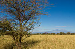 The Kilimanjaro and Mount Kenya Royalty Free Stock Photos