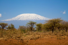 Kilimanjaro royalty free stock photography