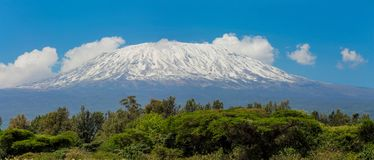 Kilimanjaro the highest mountain in Africa summit. Kilimanjaro mountain above savanna bush scenic view from Amboseli national wild nature and wildlife game royalty free stock images