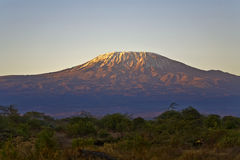 Kilimanjaro Mountain Morning Tanzania Kenya Africa Royalty Free Stock Images