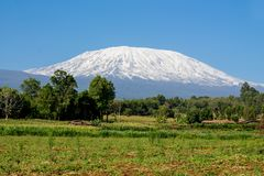 Kilimanjaro mountain summit with snow in Africa. Kilimanjaro mountain above savanna bush and jungle forest Amboseli national park in Africa, Kenya and Tanzania royalty free stock image