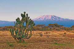 Kilimanjaro mountain at the sunrise Stock Image