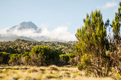 Kilimanjaro mountain view. If you hike the Marangu route on the way up to Kilimanjaro you can see beautiful landscapes Stock Photography
