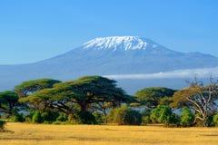 Kilimanjaro på afrikansk savannah Royaltyfri Bild
