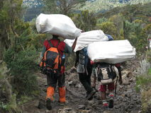 Kilimanjaro porters. (Africa Express) carrying bags of tourists climbing Kilimanjaro Mountain Stock Photos