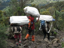 Kilimanjaro porters. (Africa Express) carrying bags of tourists climbing Kilimanjaro Mountain Royalty Free Stock Photo
