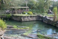 Kilimanjaro Safaris, Disney World, Animal Kingdom, Travel royalty free stock image