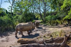 Kilimanjaro-Safaris am Tierreich bei Walt Disney World Lizenzfreies Stockfoto