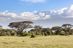 Kilimanjaro with snow cap. Seen from Amboseli National Park in Kenya Stock Photography