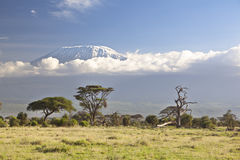 Kilimanjaro with snow cap Royalty Free Stock Photography