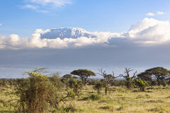 Kilimanjaro with snow cap. Seen from Amboseli National Park in Kenya Stock Image