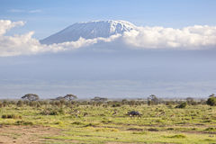 Kilimanjaro with snow cap. Seen from Amboseli National Park in Kenya Royalty Free Stock Photos