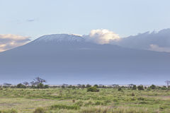 Kilimanjaro with snow cap royalty free stock images