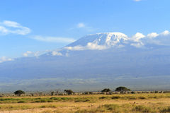 Kilimanjaro Royalty Free Stock Photo