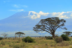 Kilimanjaro Stock Images