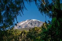Kilimanjaro taken from rain forest, Tanzania Royalty Free Stock Photo