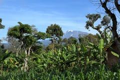 Kilimanjaro in Tanzania stock foto