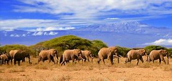 Kilimanjaro und Elefanten Stockfotografie