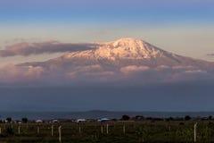 Kilimanjaro w wieczór Fotografia Royalty Free