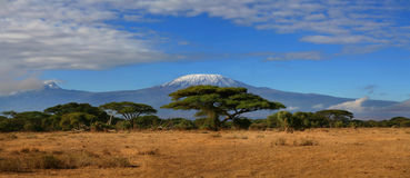 Kilimanjaro Wide. A digital wide angle image of Mount Kilimanjaro in Tanzania taken from the north side in Kenya