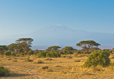 kilimanjarobergsoluppgång royaltyfri foto