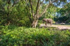 Kilimanjarosafaris bij Dierenrijk in Walt Disney World Royalty-vrije Stock Foto