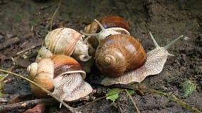 Kilka ślimaczki ono ślizga się na ziemi przy parkiem zbiory