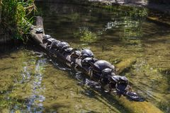 Kilka żółwie obrazy stock
