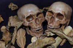 Kilka czaszka z wysuszonymi liśćmi i kością na czarnym tle Obraz Stock