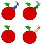 Kilka czerw wyłania się od wiśni lub jabłka Zdjęcie Stock