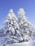 kilka drzewo Zdjęcia Stock