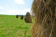 Kilka hayrick na zielonym polu Fotografia Stock