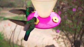 Kilka hummingbirds karmi w dozowniku zbiory