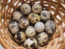 Kilka mali łaciaści przepiórek jajka kłamają w łozinowym koszu obraz royalty free