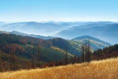 Kilka nieżywe wysuszone sosny wśród wzgórzy Zdjęcie Royalty Free