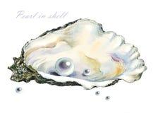 Kilka perły w perełkowej skorupie ilustracja wektor