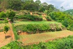 Kilka plantacja poziomy na wzgórzu na gospodarstwie rolnym obraz stock