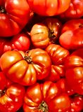 Kilka pomidorów duży tło fotografia royalty free