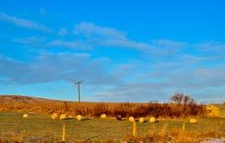 Kilka przy zmierzchem barani pasanie na gospodarstwie rolnym obrazy stock
