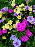 Kilka różni kolory kwitną w łóżku fotografia stock