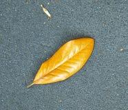 Kilka spadać liście, kolor żółty brąz, kłama na popielatego pavementA liścia pojedynczym złotym lying on the beach na popielatym  zdjęcie royalty free