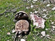 Kilka tortoise zdjęcia royalty free