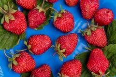 Kilka truskawki na błękita talerza spojrzeniu od góry obraz royalty free