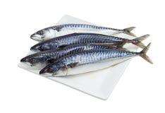 Kilka uncooked Atlantycka makrela na białym naczyniu Obraz Stock