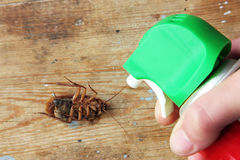 Kill cockroach with pest exterminator Stock Photo