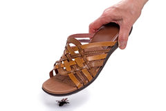 Kill a fly shoes Stock Photography