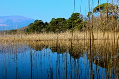 Killarney-Berg Stockbild