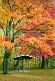 Killarney Colours. Majestic Maple Tree in full Fall splendour - Killarney Provincial Park, Ontario Stock Photo